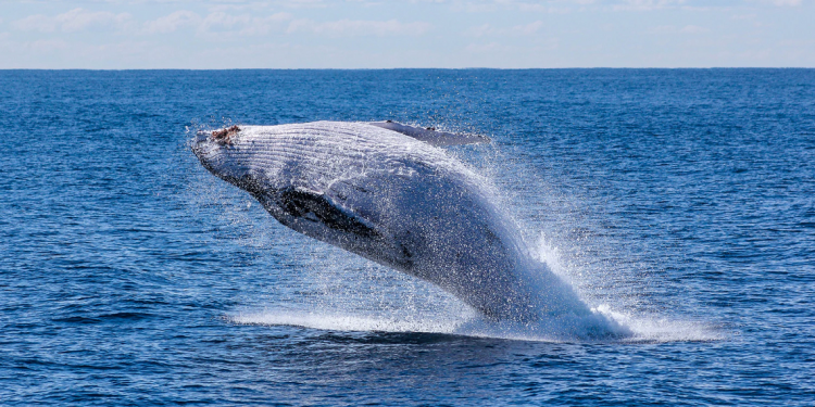 XRP whale moves 90M XRP as BTC and ETH whales swarm the market