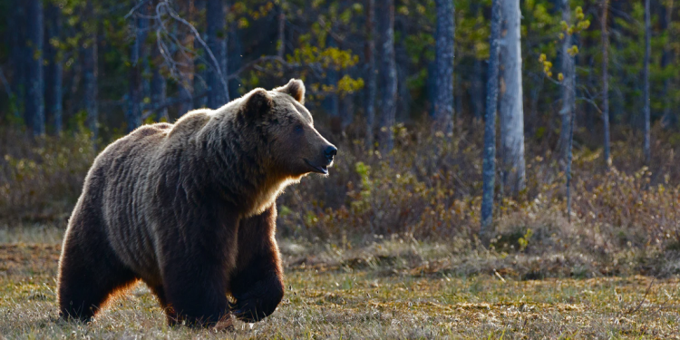 Cardano price prediction: bears in control, will $0.145 support hold?