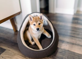 Dogecoin price prediction Has the joke gone too far with Doge Day 420