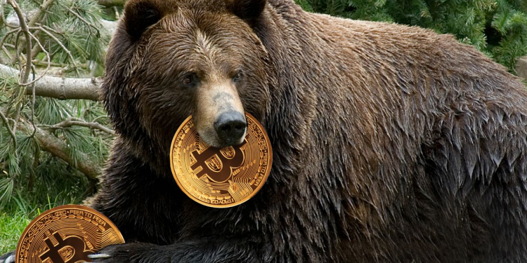 A Smarter Way to Hodl and Grow Wealth In A Bear Market 1