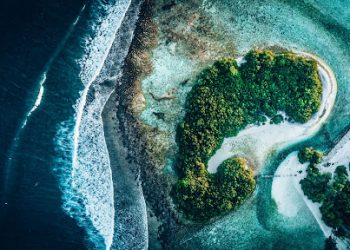 How Blockchain Can Clean Our Oceans and Save the Forests 2
